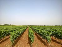 Agricole De Palma